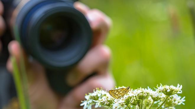 Take Better Nature Photos