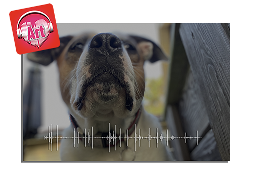 Pet Soundwave photo